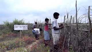 Mangrove Conservation Field Work - OMCAR Foundation - Sep - 2011