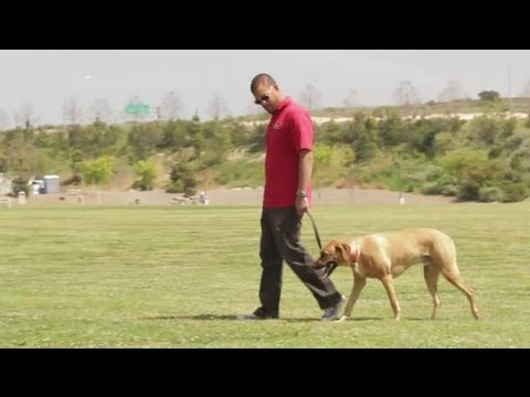 How to Stop Dogs From Mounting Other Dogs : Dog Behavior & Training