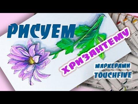 Как нарисовать хризантемы карандашом