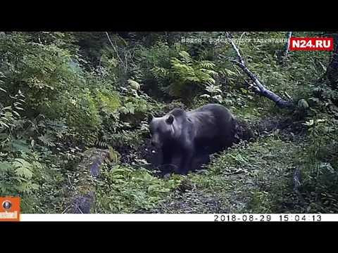 Дикие животные выходят к людям в Красноярском крае