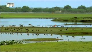 phoenix: Flüsse der Welt - Orinoko