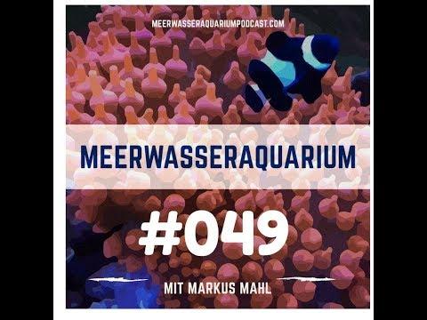 Meerwasserfische und Korallen online kaufen?    - Aquarium West GmbH München