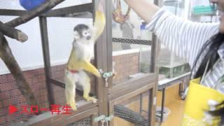 福岡ECOコミュニケーション専門学校で飼育されている様々な小動物が、ト...
