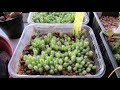 The Cacti Succulent Plant Seedlings I Have Sown From Seed In 2018 UPDATE mp3