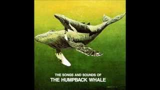 Humpback Whales... Recorded in Hawaiian Waters off the Coast of Maui
