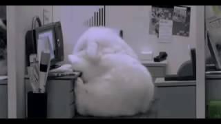 Кролик хочет спать !