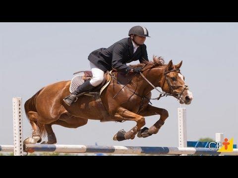 Clique e veja o vídeo Curso Aprenda a Montar e Lidar com Cavalos - Equipamentos para Montaria - Cursos CPT