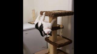 Я - кот, мне так удобно (выпуск 21). Забавные картинки про котов