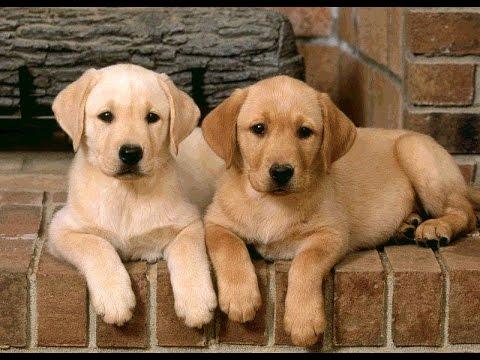 Собачьи гороскопы: гороскопы для собак и их владельцев