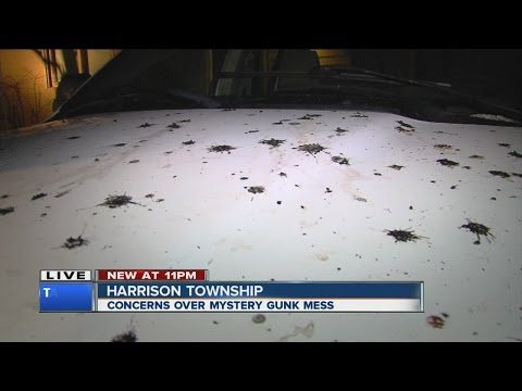 Mystery Gunk In Harrison Township