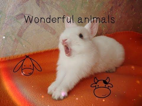 Мой кролик Умка