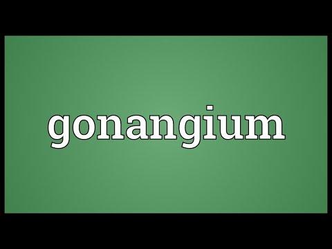 Header of gonangium