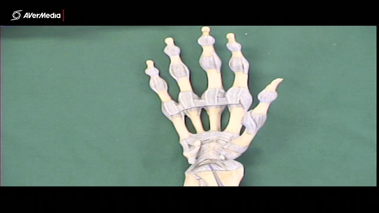 Ligaments Of The Wrist Youtube