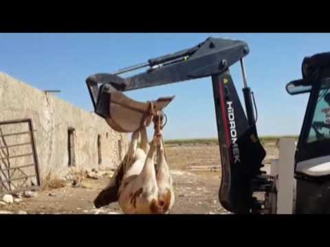 Kuduz Nedeniyle Koyde Karantina Uygulamasi Baslatildi
