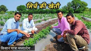 मिर्च की खेती कैसे करें   मिर्च की खेती की जानकारी   My Kisan Dost