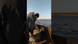 Ловля рыбы сетями Кринички сити ч2
