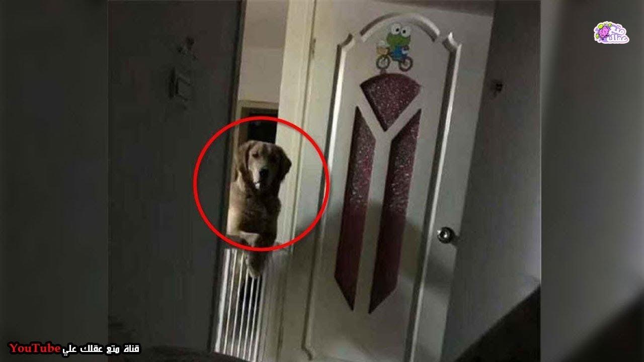 c8d6cf3204059 رجل لاحظ أن كلبه يراقبه أثناء نومه كل ليلة ، الى ان اكتشف حقيقة مفزعة !