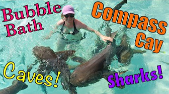 Popular Videos - Compass Cay & Tourism - YouTube