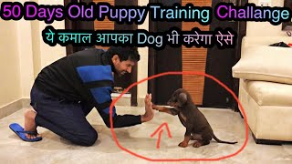 Doberman Puppy Training @ Home 💕🔥👌🏻 Sit Hi-Five and attacking training by Royal Soldier 🇮🇳