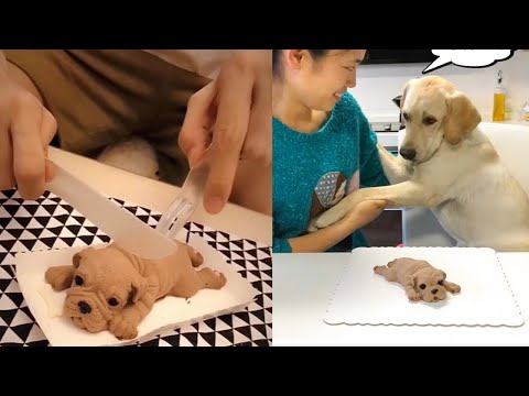 Dogs and Cats Reaction to Cutting Cake – Funny Dog Cake Reaction Compilation