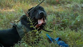 K9 Units Train For Search and Rescue