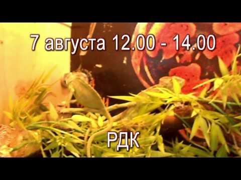 7 августа состоится выставка живых рептилий и пауков. РДК. Тетюши - медиа.