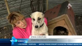 В Калининграде спасли собаку, которую пытались утопить вместе со щенками