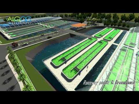 Open Ponds Algae Project - TPM Malaysia