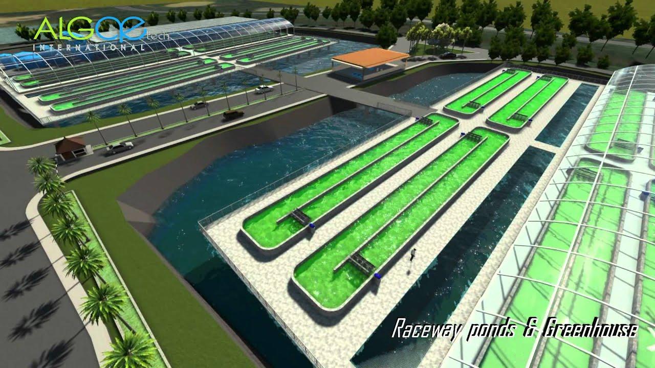 Open Ponds Algae Project Tpm Malaysia Youtube