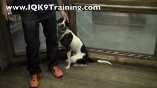 Iq K9 Training | Real-life Dog Training | Elevator Ride | Fallbrook Dog Training