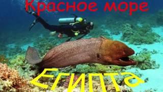 Пляжи в Шарм-эль-Шейх. Красное море Египта(Пляжи в Шарм-эль-Шейх. Красное море Египта. Это видео посвящается одному из красивейших морей мира - Красном..., 2016-11-15T09:48:33.000Z)