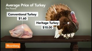 $200 Purebred Thanksgiving Turkeys for the One Percent
