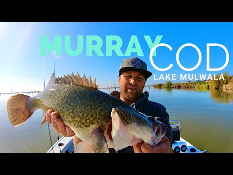 Murray Cod Fishing - Lake Mulwala