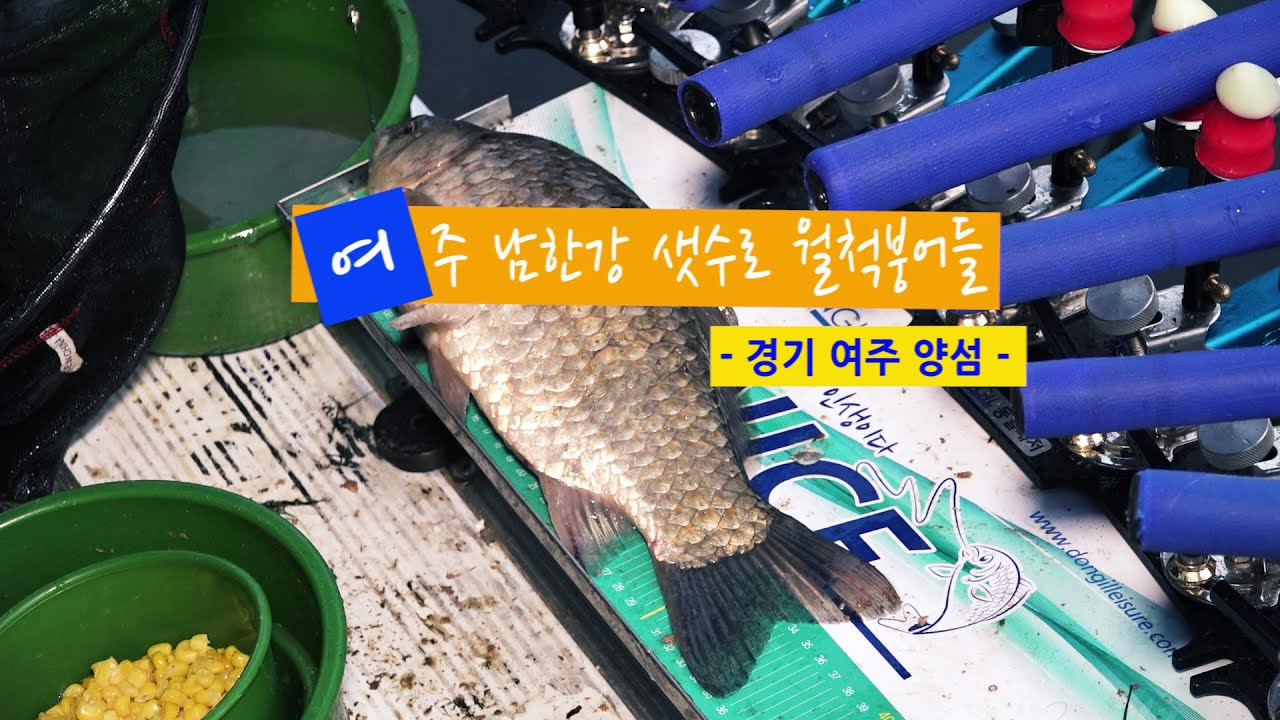 [자연지] 120.여주 남한강 샛수로 월척붕어들 - 경기 여주 양섬(2020.6.8)
