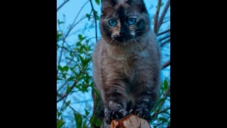 Чесотка или дерматит у кошки? // Мурыся заболела \\ Мое хозяйство