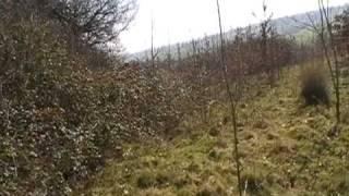 Land at Whittersham Kent