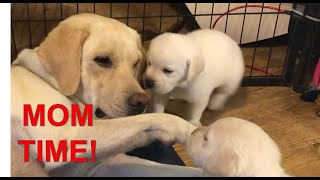 Puppy wake up!!