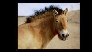 Suck A Horse