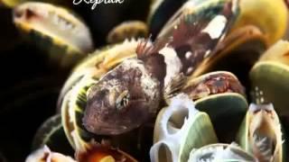 Животный мир Белого моря(Видео предоставлено информационно-развлекательным порталом о рыбалке и всем, что с ней связано megaribolov.ru...., 2013-09-13T13:06:08.000Z)