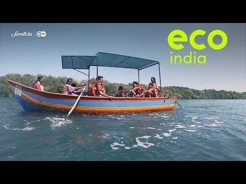 In the coastal village of Vengurla, fisherwomen have turned to ecotourism to preserve mangroves