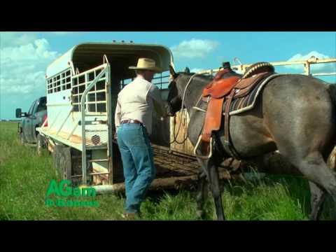 Around Kansas - Ron Wilson poem: Livestock Trailers - March 9, 2016