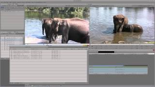 Learn Media Composer Lesson 29: Media Management/Media Tool