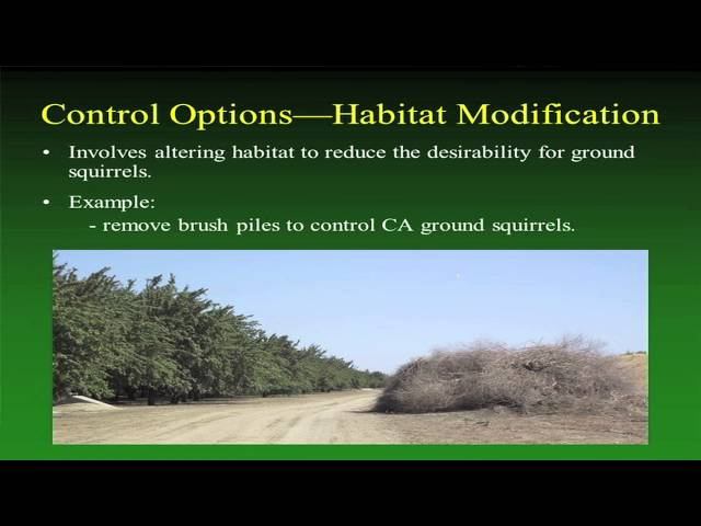 How to Manage Ground Squirrel Populations