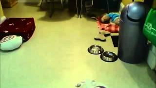 We put a hidden camera on this dog and you wont believe what he did
