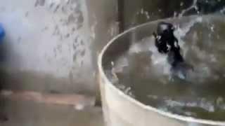 Кошка прыгает в воду