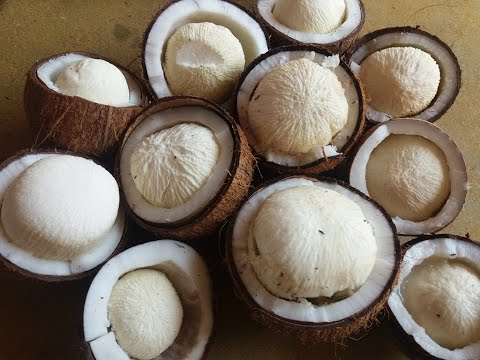 tasting coconut flower in my village healthy natural