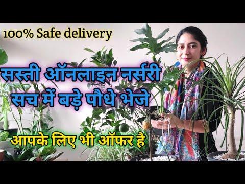 Online plant shopping _Affordable online plant nursery,Send really big plants.सस्ती ऑनलाइन नर्सरी