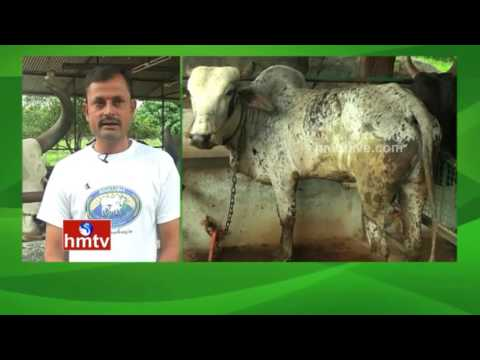 Livestock Farming | Ideal Farmer Rajinikanth Tips | Nela Talli | HMTV