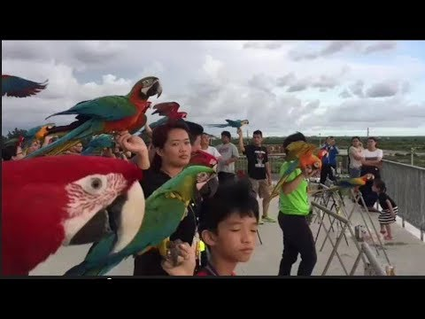 What types of parrots can you legally own in the US? -