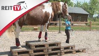 Homestory | Saskia und ihr Pferd Lucky